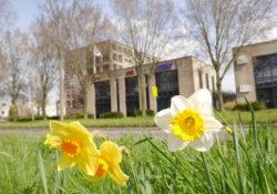 Gouda Goverwelle - Dienstverlening - Webburo Spring