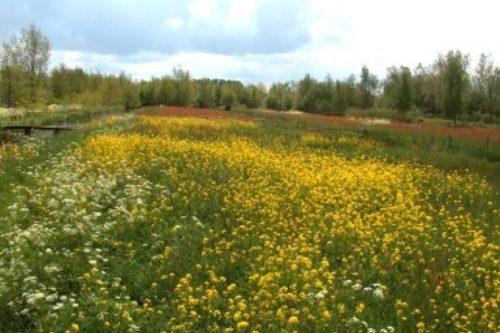 Gouda Goverwelle - Activiteiten - Taalzomer: Tuinwandeling Heemtuin Goudse Hout