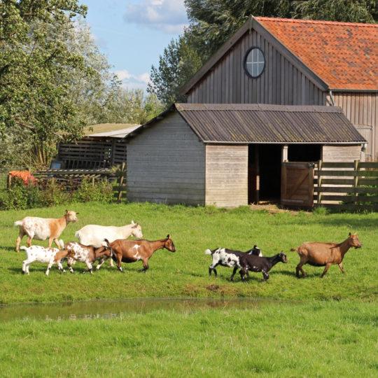 Gouda Goverwelle - Nieuws - Goverwelle - De Dierenweide Goverwelle mag vanaf 2 juni weer open